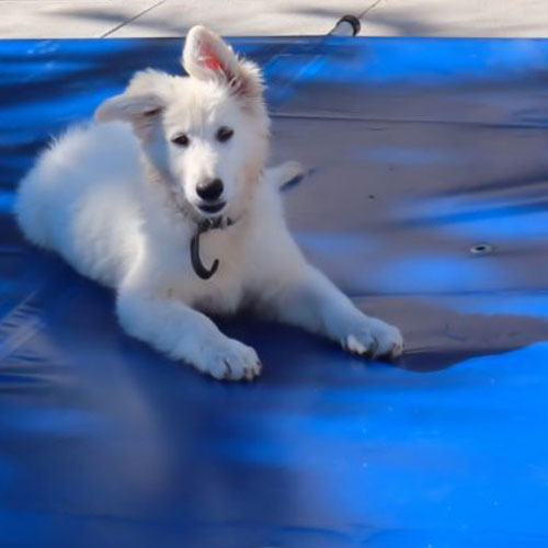 pet-friendly-pool-cover
